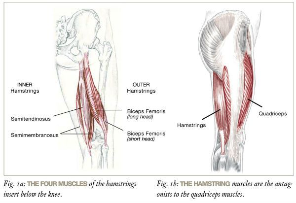 Relief For Tight Hamstrings