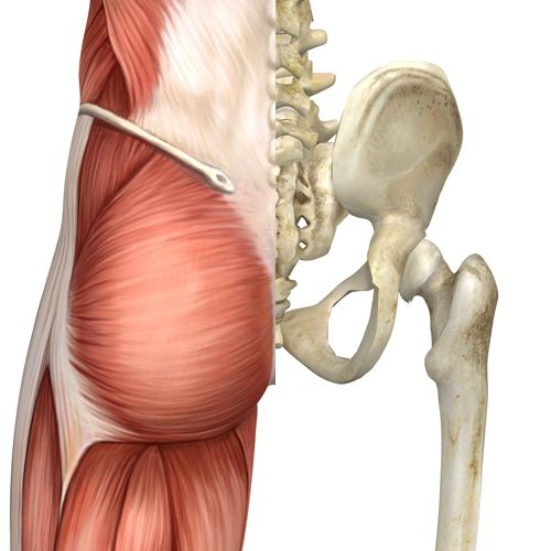 muscles surrounding the sacroilliac joint
